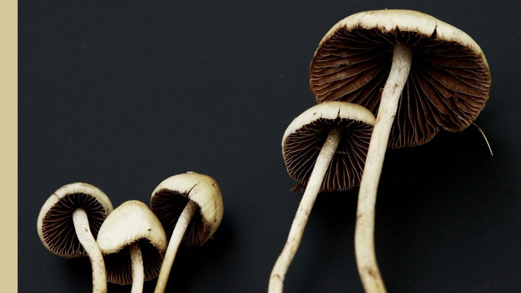Find in a simple way different magic mushrooms Canada
